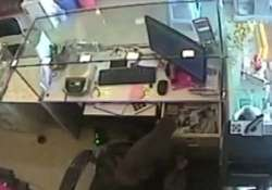 Still from the video of monkey stealing money from the cash