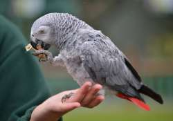 WATCH Einstein, the parrot can imitate the sounds