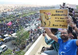 Jallikattu: Protesters refuse to back down- India Tv