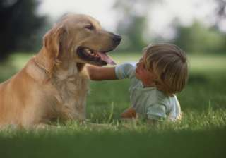 Dogs possess social skills similar to toddlers - India TV