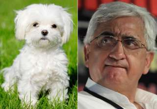 Salman Khurshid duped of Rs 59,000 while trying...