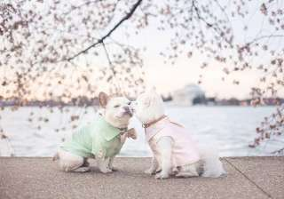 This dog couple's 'Engagement Photoshoot'...