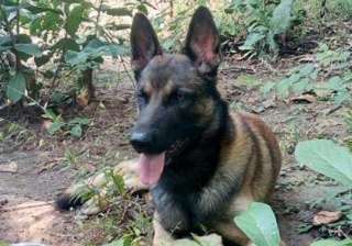 CRPF sniffer dog 'Cracker' dies in Maoist...