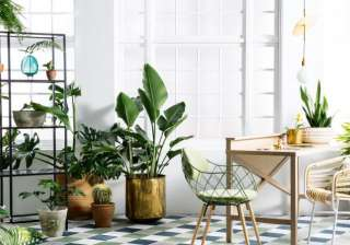 These 6 plants will keep your home cool this...
