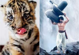 Baahubali born in Odisha - India TV