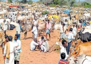 Cattle trade at animal markets - India TV