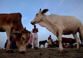 Declare cow as national animal: Gujarat Youth...