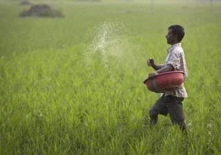 GST Council cuts tax rate on fertiliser to 5 per...