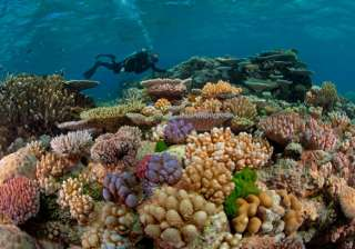 The Great Barrier Reef, coral reef, lifestyle - India TV