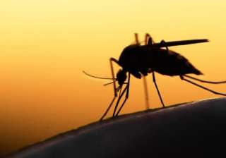 zika affected by dengue - India TV