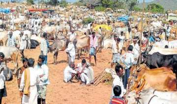 Cattle trade at animal markets