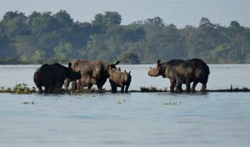 38 per cent of the Kaziranga National Park is...