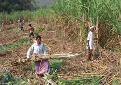 up dms issued contempt notices over sugarcane dues