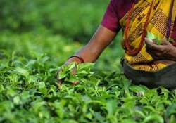 tea board says industry should move towards high standards