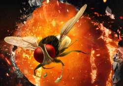 eega takes foreign film fests by storm