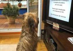 a tv channel for dogs in germany