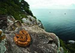 know about the deadliest place in the world snake island