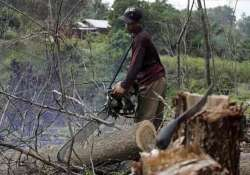 indonesia now country with world s highest deforestation