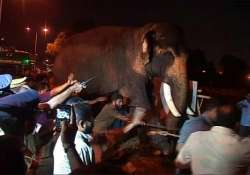 elephant runs amok during kerala temple festival damages 3