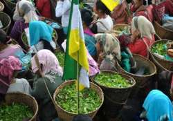 tea garden unions reject bengal s proposal on wages