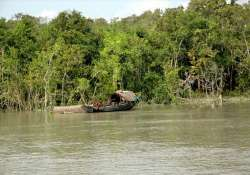 poachers turned conservationists in sunderbans