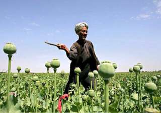 govt to allow pvt sector to produce alkaloids...