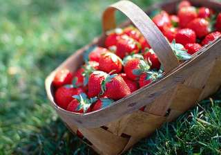 summer special savour strawberries dishes see...