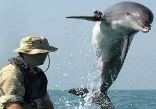 crimea s war dolphins now in hands of russian...