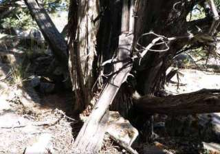 gun from 1800s found leaning against tree in us -...