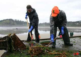 invasive species ride tsunami debris to us shore...