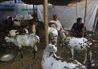 this eid sacrificial animals in pakistan can cost...