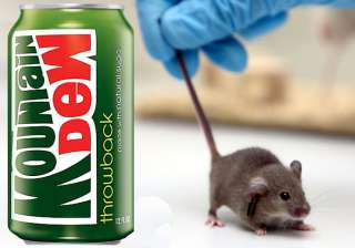 us man sues pepsi after finding tiny mouse inside...