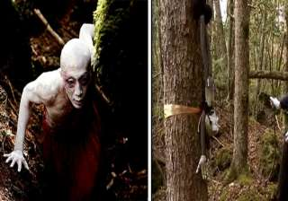 unexplained mystery of japan s forest of death -...