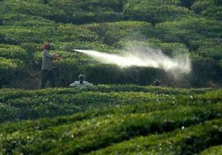 campaign against use of pesticides in bangalore -...