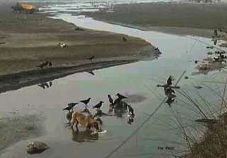 104 bodies found in ganga probe ordered - India TV