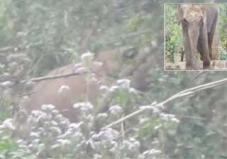 madly in love male wild tusker breaks into odisha...