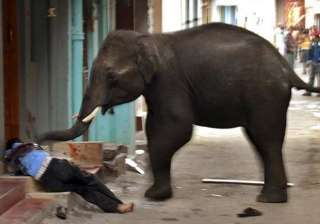 man trampled to death by elephant - India TV