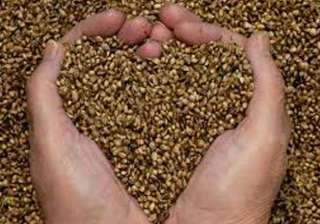 govt to provide free seeds to farmers in...