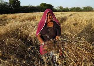 rains destroy 50 000 hectares of crops in...