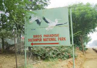 47 birds die in sultanpur national park visitors...