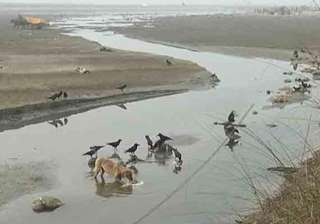 30 bodies found in canal in unnao - India TV