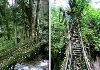 know about the amazing living tree root bridges...