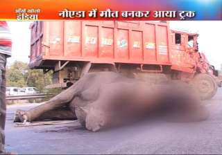 truck crushes elephant to death in noida - India...