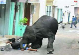 two killed in tusker attack in bengal - India TV