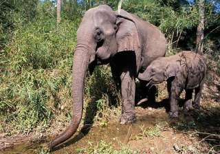 villagers to relocate to make way for jumbos -...