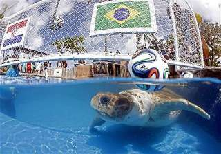 fifa world cup brazil s animal oracle predicts...