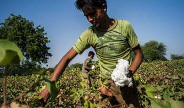 cotton crop estimated at 381 lakh bales for 2013...