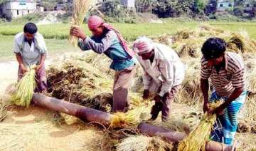 foodgrain output to fall by 5 to 251 million...