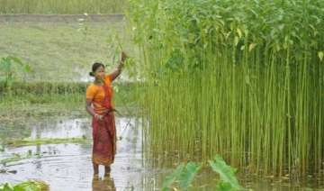 gom to meet on jute situation on may 19 - India TV