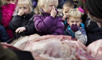 danish zoo slammed for dissecting lion in front...